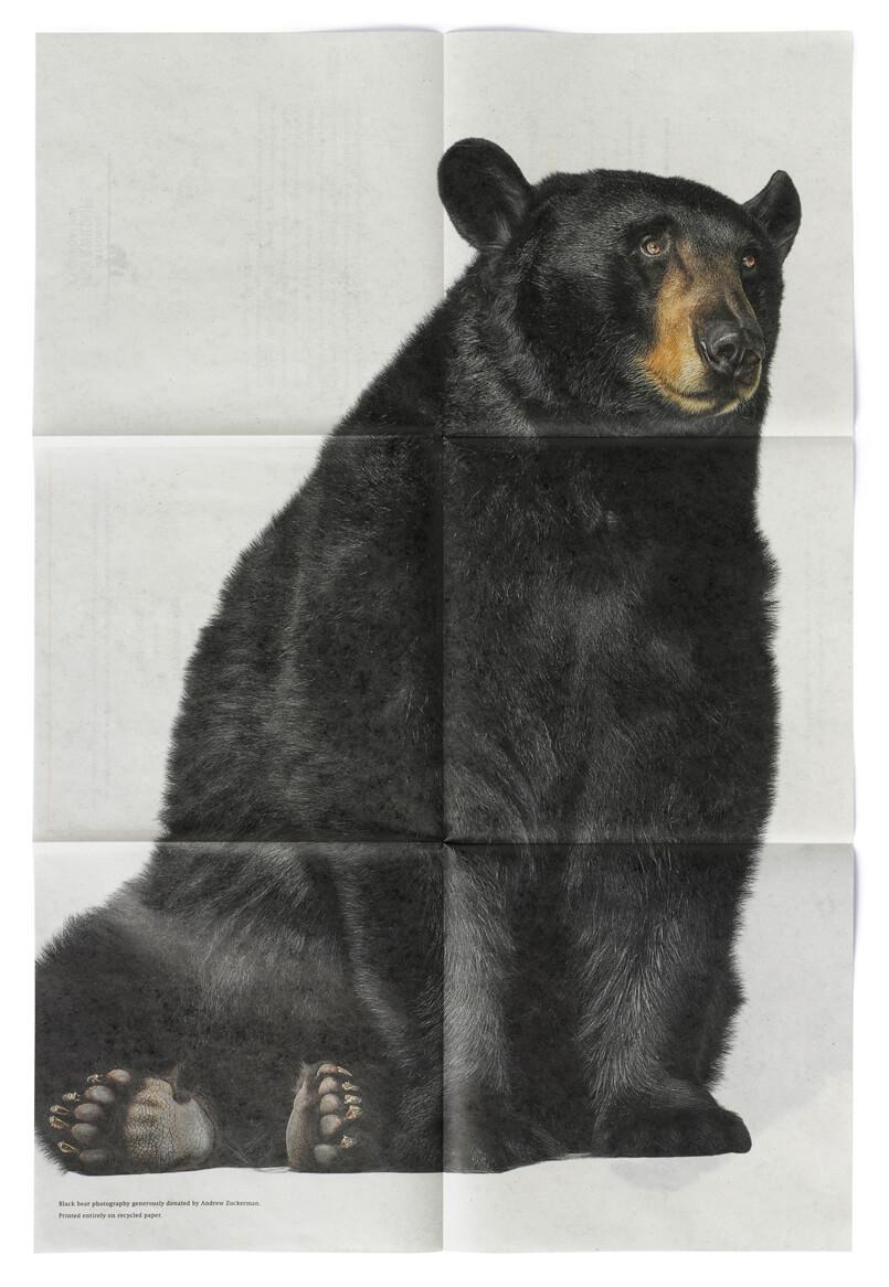 Black bear printed on open 6-panel newsprint